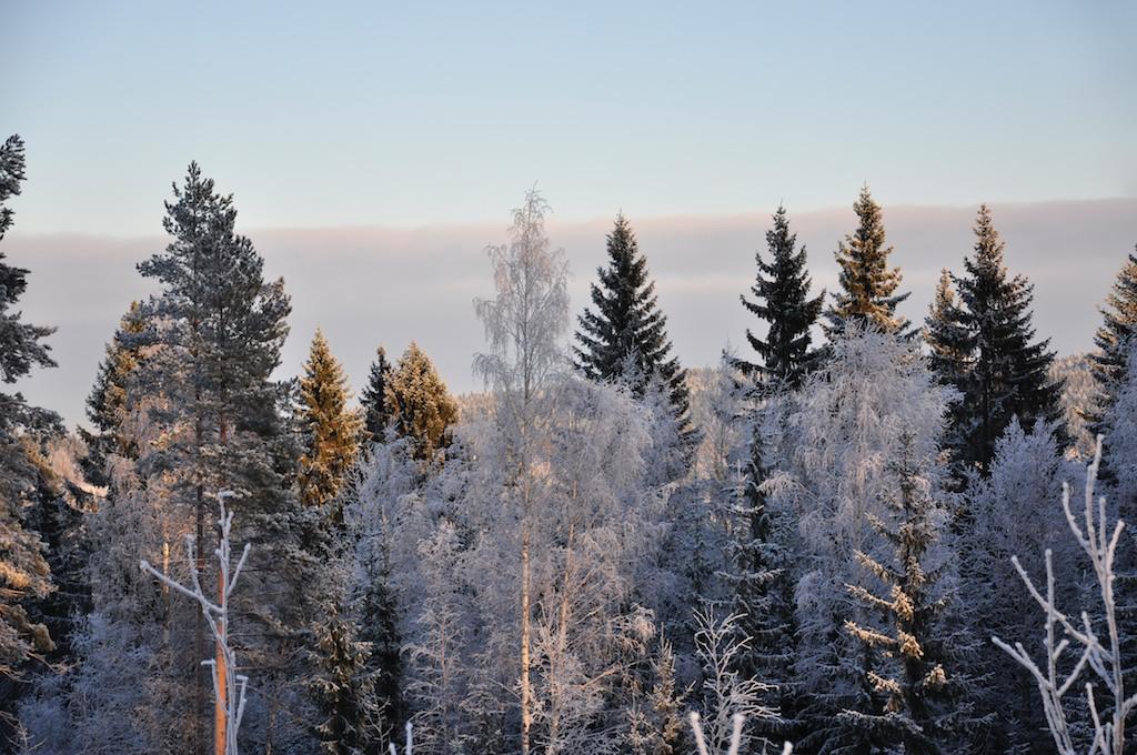 talvisää