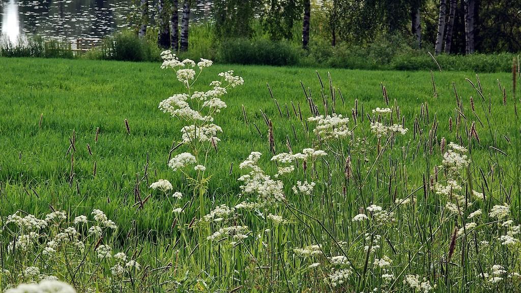 Suomen yleisimmät kasvit kuvina