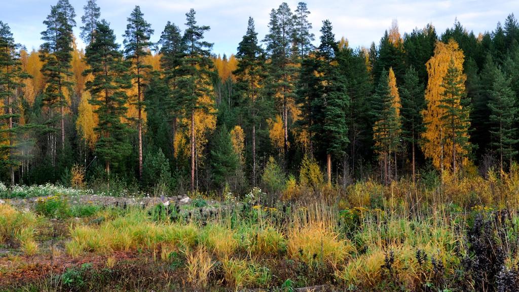 Elämää Metsässä